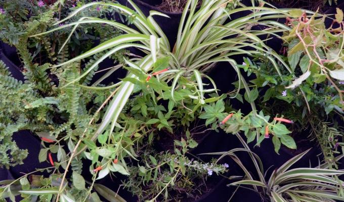 Testing vertical gardens