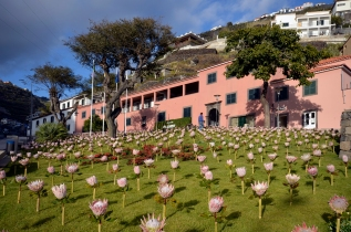 FLOWER INSTALLATION CALHETA